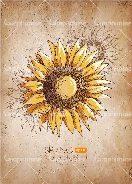 دانلود وکتور گل آفتابگردان