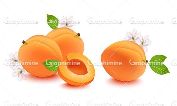 دانلود وکتور میوه هلو