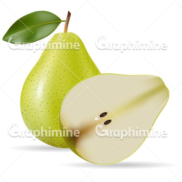 دانلود وکتور میوه گلابی