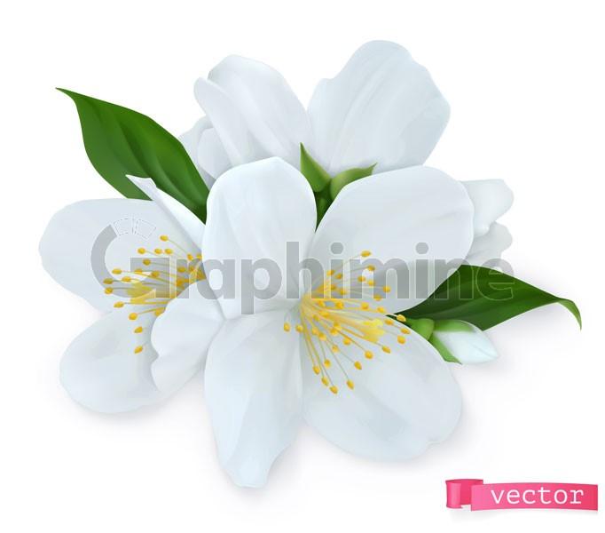 وکتور گل