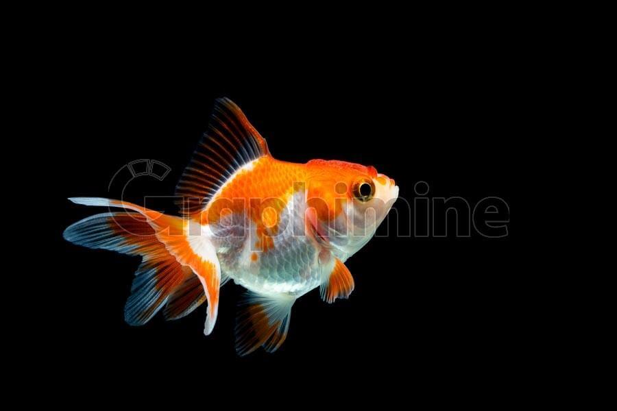تصویر استوک ماهی