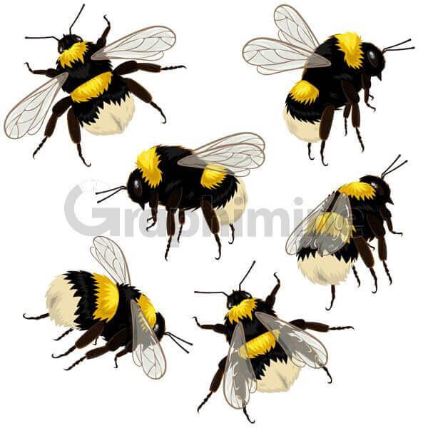 وکتور طرح زنبور عسل