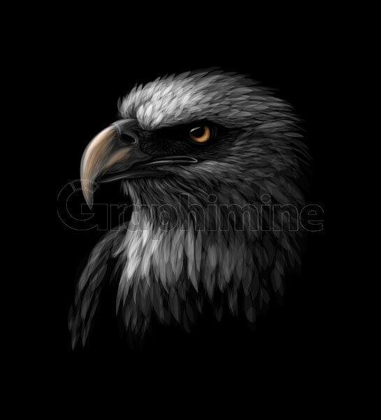 وکتور پرتره سر عقاب