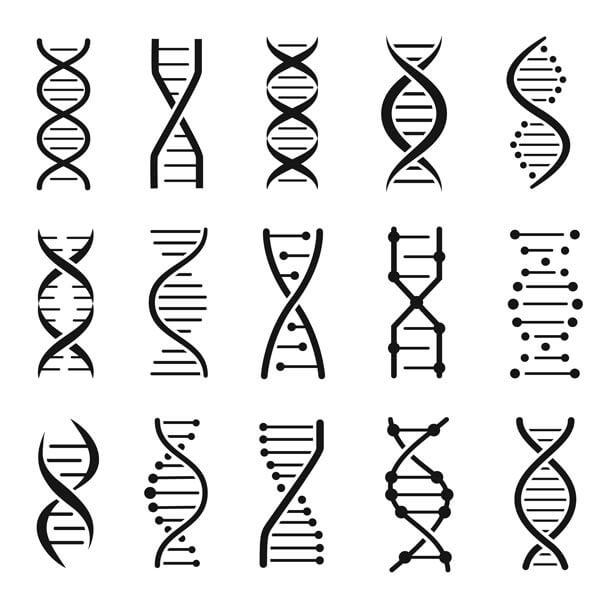 همانطور که مشاهده می نمائید ، تصویر فوق پیش نمایشی از فایل اصلی وکتور آماده است، که شما کاربر عزیز می توانید در طراحی های تجاری و تبلیغاتی خود از این فایل وکتور لوگو ساختار مولکول دی ان ای زنجیر کروموزوم استفاده نمائید. همچنین شما می توانید با یکی از خرید اشتراک های سایت ( به انتخاب خود ) از گرافی ماین به طور نامحدود دانلود نمائید.